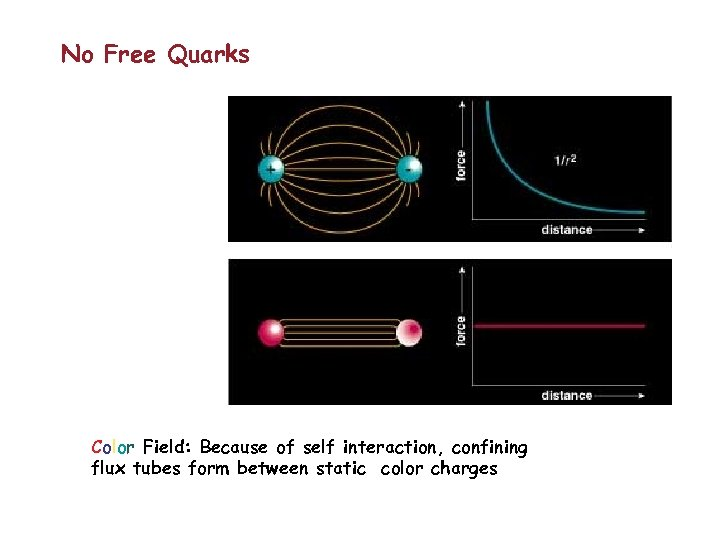 No Free Quarks Color Field: Because of self interaction, confining flux tubes form between