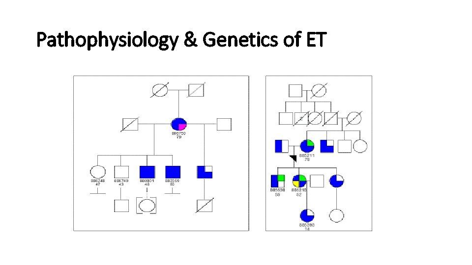 Pathophysiology & Genetics of ET
