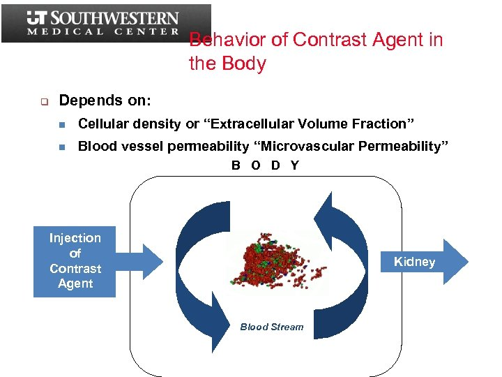 Behavior of Contrast Agent in the Body q Depends on: n Cellular density or