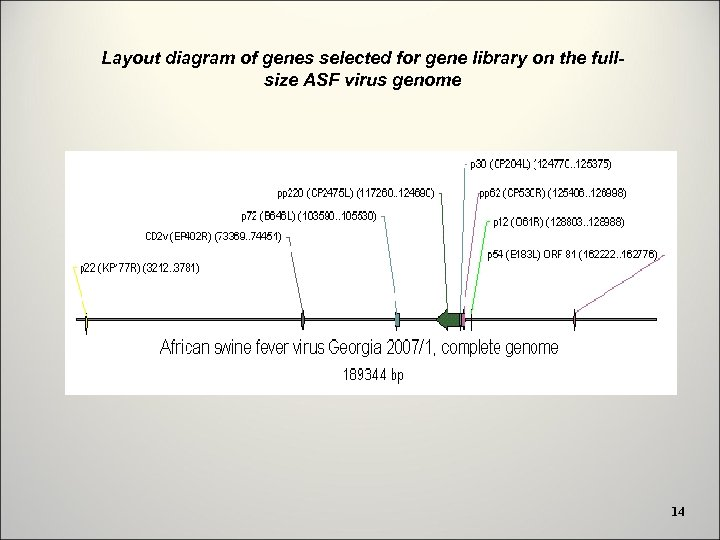 Layout diagram of genes selected for gene library on the fullsize ASF virus genome