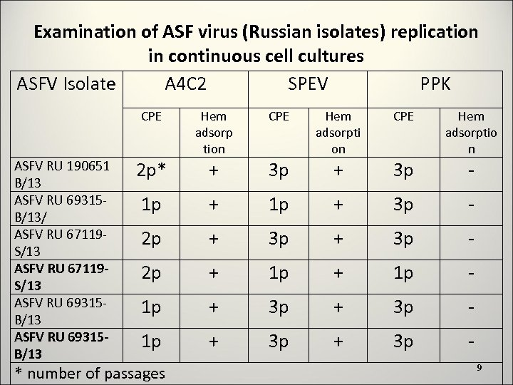Examination of ASF virus (Russian isolates) replication in continuous cell cultures ASFV Isolate A