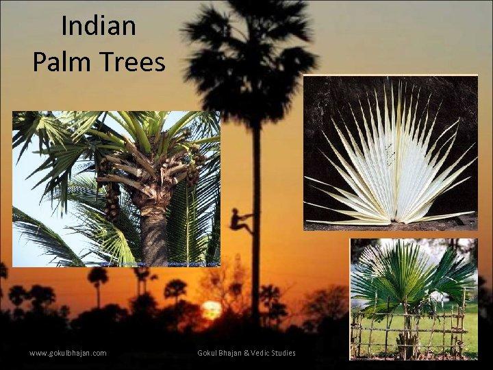 Indian Palm Trees www. gokulbhajan. com Gokul Bhajan & Vedic Studies 14
