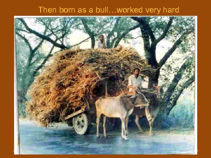 Then born as a bull…worked very hard www. gokulbhajan. com Gokul Bhajan & Vedic