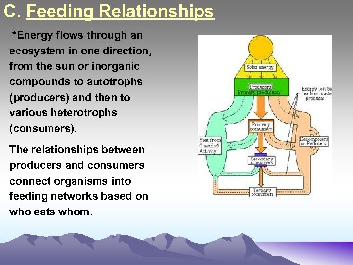 C. Feeding Relationships *Energy flows through an ecosystem in one direction, from the sun
