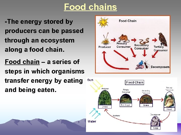 Food chains -The energy stored by producers can be passed through an ecosystem along