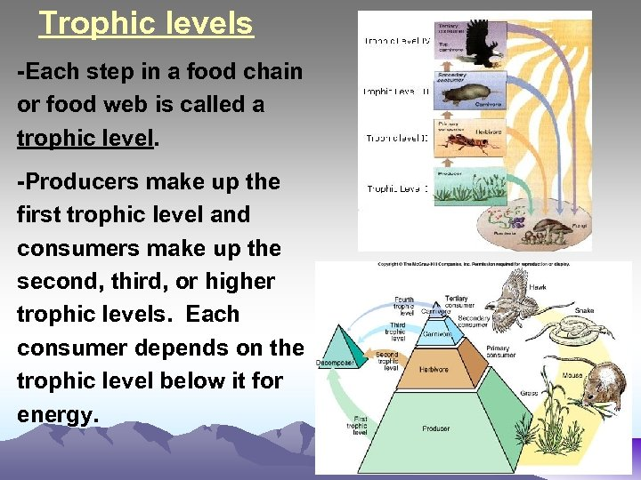 Trophic levels -Each step in a food chain or food web is called a