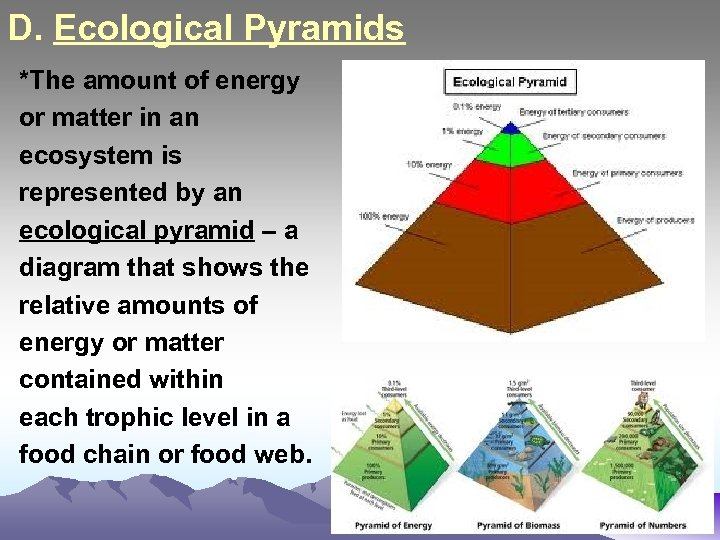 D. Ecological Pyramids *The amount of energy or matter in an ecosystem is represented
