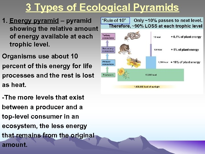 3 Types of Ecological Pyramids 1. Energy pyramid – pyramid showing the relative amount
