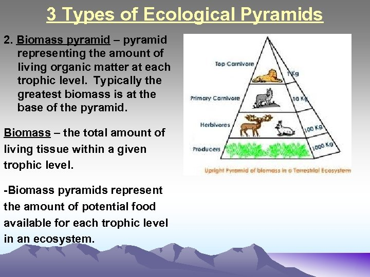 3 Types of Ecological Pyramids 2. Biomass pyramid – pyramid representing the amount of