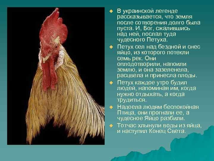 u u u В украинской легенде рассказывается, что земля после сотворения долго была пуста.