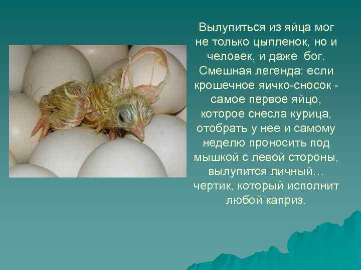 Вылупиться из яйца мог не только цыпленок, но и человек, и даже бог. Смешная