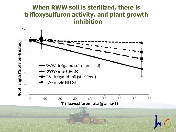 When RWW soil is sterilized, there is trifloxysulfuron activity, and plant growth inhibition Root