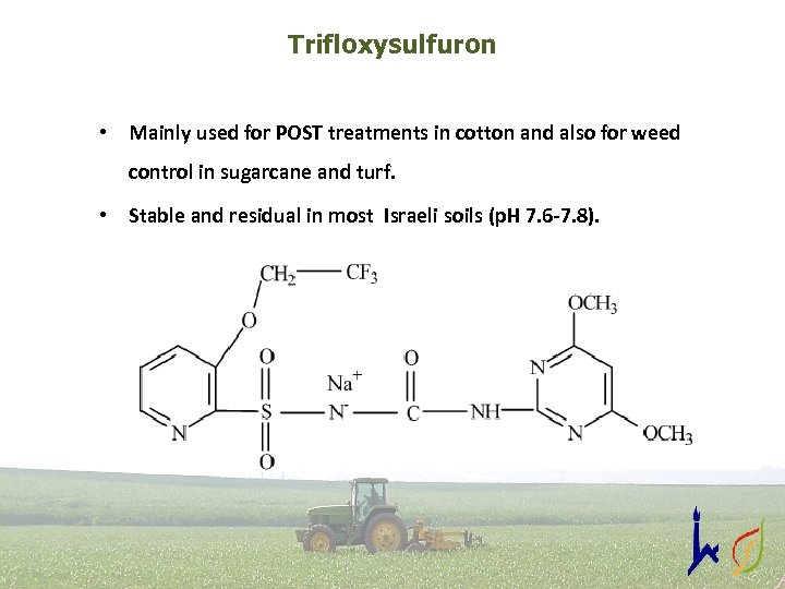 Trifloxysulfuron • Mainly used for POST treatments in cotton and also for weed control