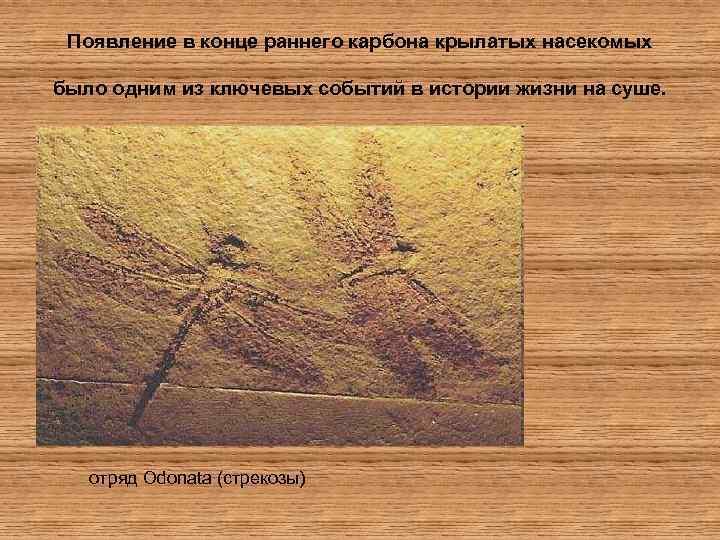 Появление в конце раннего карбона крылатых насекомых было одним из ключевых событий в истории
