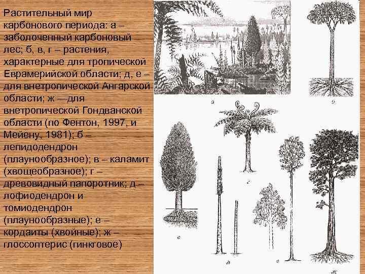 Растительный мир карбонового периода: а – заболоченный карбоновый лес; б, в, г – растения,