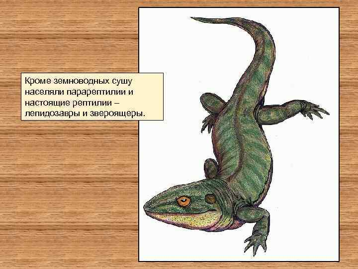 Кроме земноводных сушу населяли парарептилии и настоящие рептилии – лепидозавры и звероящеры.