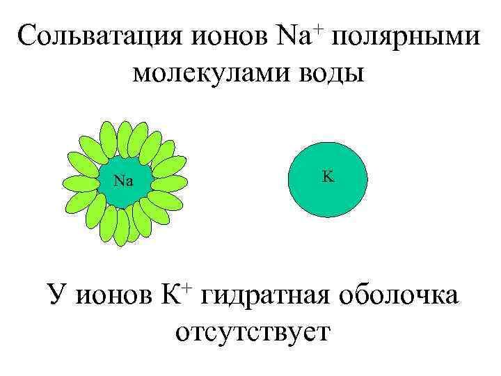 + полярными Сольватация ионов Na молекулами воды Na K + гидратная оболочка У ионов