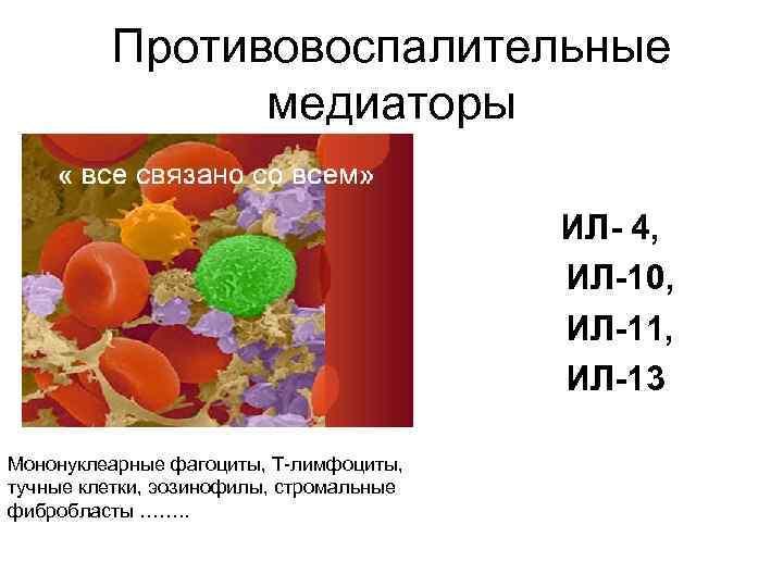 Противовоспалительные медиаторы ИЛ- 4, ИЛ-10, ИЛ-11, ИЛ-13 Мононуклеарные фагоциты, Т-лимфоциты, тучные клетки, эозинофилы, стромальные