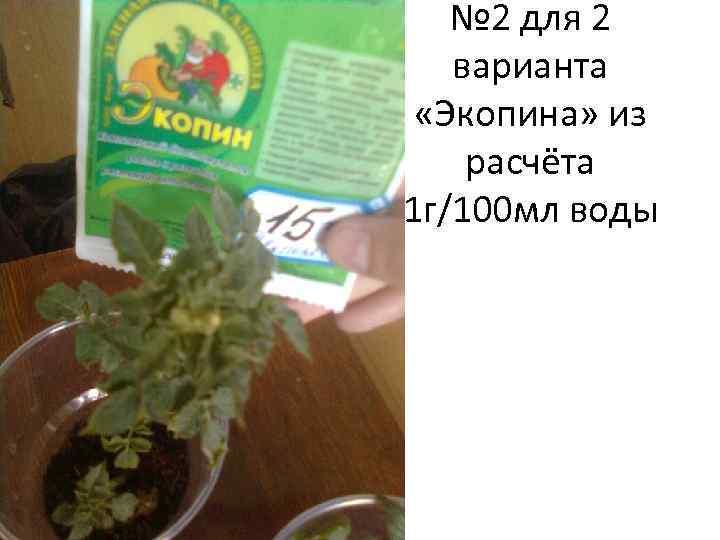 № 2 для 2 варианта «Экопина» из расчёта 1 г/100 мл воды