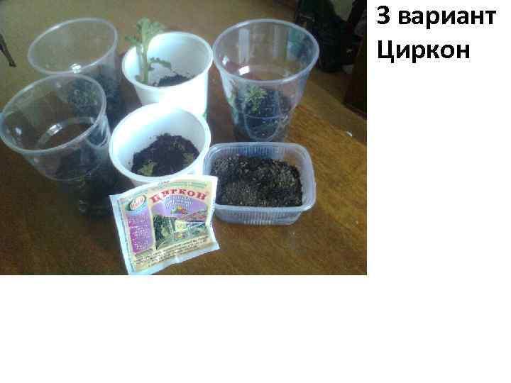 3 вариант Циркон