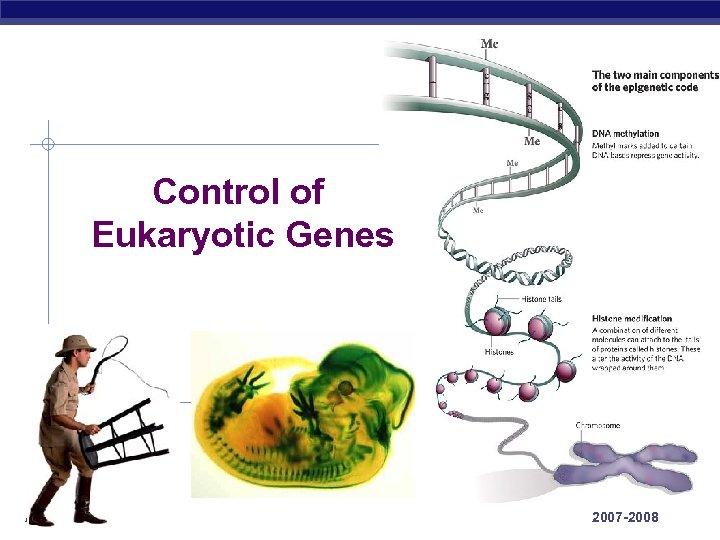 Control of Eukaryotic Genes AP Biology 2007 -2008