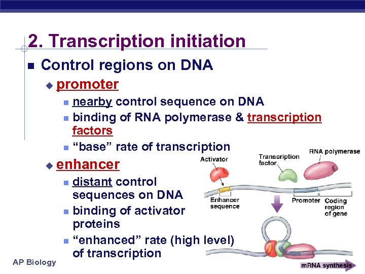 2. Transcription initiation Control regions on DNA u promoter nearby control sequence on DNA