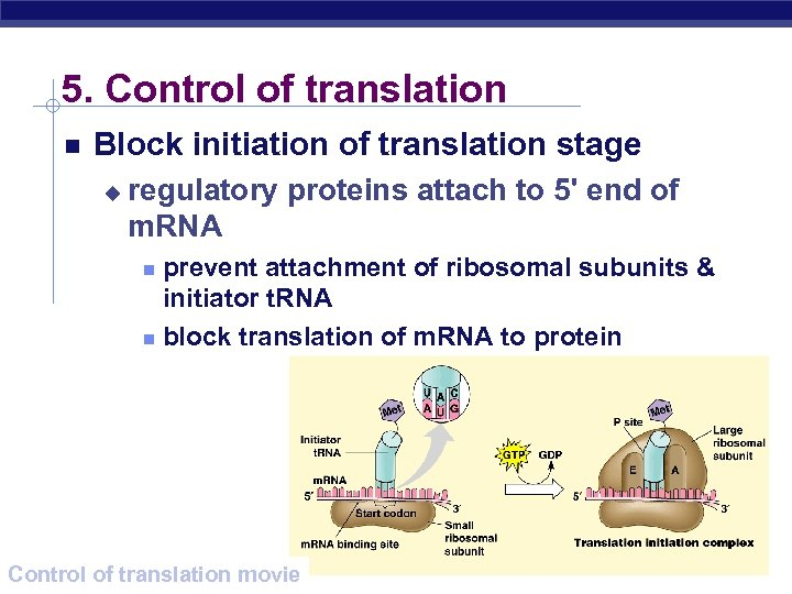 5. Control of translation Block initiation of translation stage u regulatory proteins attach to