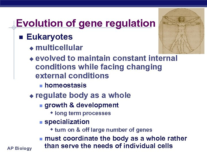 Evolution of gene regulation Eukaryotes multicellular u evolved to maintain constant internal conditions while