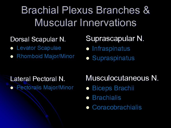 Brachial Plexus Branches & Muscular Innervations Dorsal Scapular N. l l Levator Scapulae Rhomboid