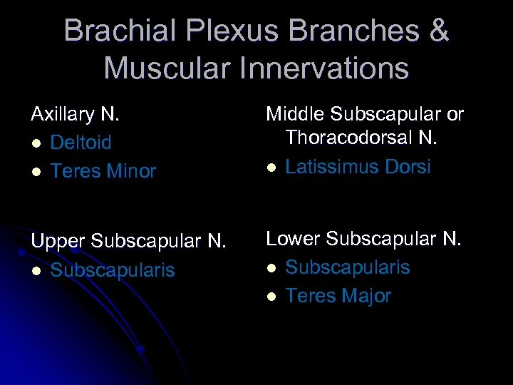 Brachial Plexus Branches & Muscular Innervations Axillary N. l Deltoid l Teres Minor Middle