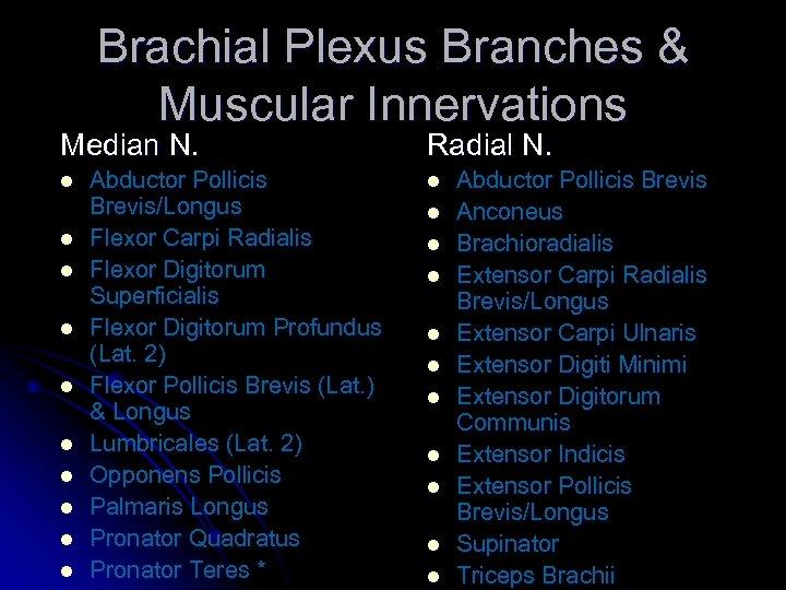 Brachial Plexus Branches & Muscular Innervations Median N. l l l l l Abductor