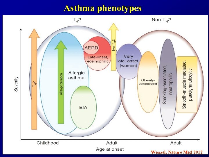 Asthma phenotypes Wenzel, Nature Med 2012