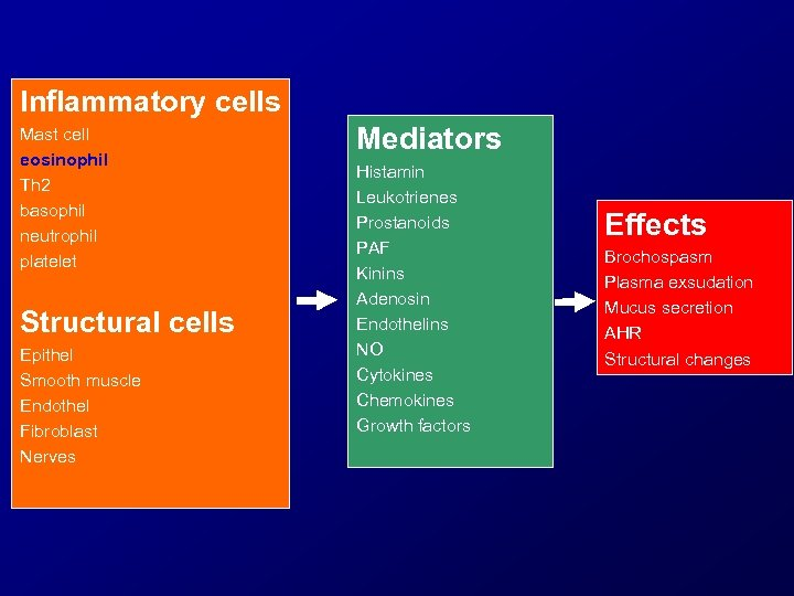 Inflammatory cells Mast cell eosinophil Th 2 basophil neutrophil platelet Structural cells Epithel Smooth