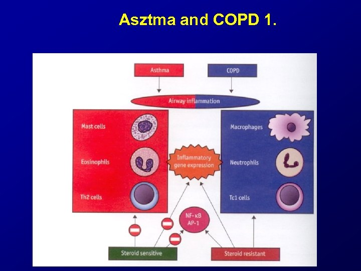 Asztma and COPD 1.