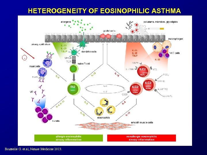 HETEROGENEITY OF EOSINOPHILIC ASTHMA - Brusselle G. et al, Nature Medicine 2013.