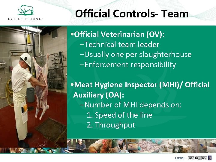 Official Controls- Team • Official Veterinarian (OV): –Technical team leader –Usually one per slaughterhouse
