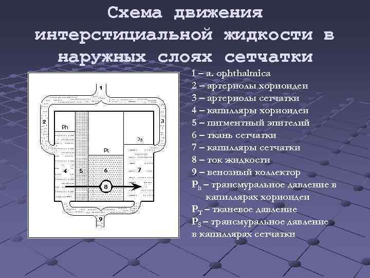 Схема движения интерстициальной жидкости в наружных слоях сетчатки 1 – a. ophthalmica 2 –