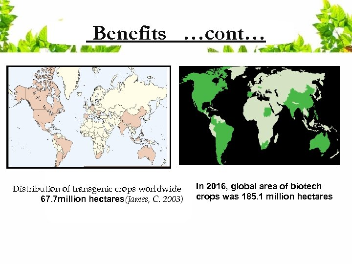 Benefits …cont… Distribution of transgenic crops worldwide 67. 7 million hectares(James, C. 2003) In