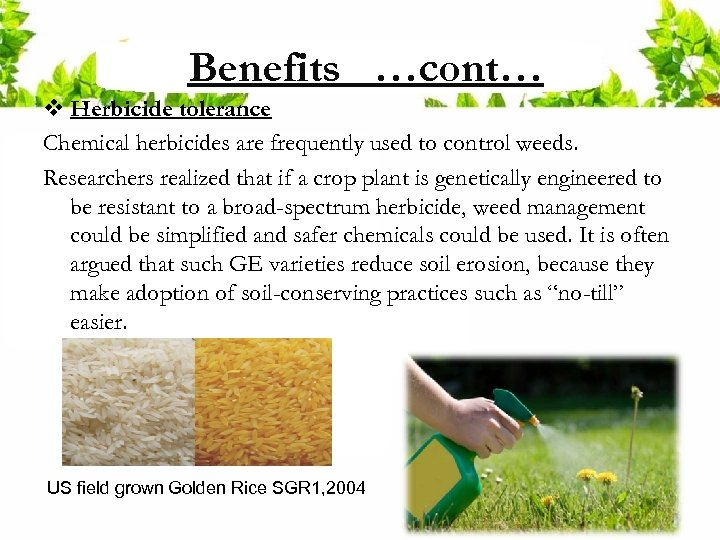 Benefits …cont… v Herbicide tolerance Chemical herbicides are frequently used to control weeds. Researchers