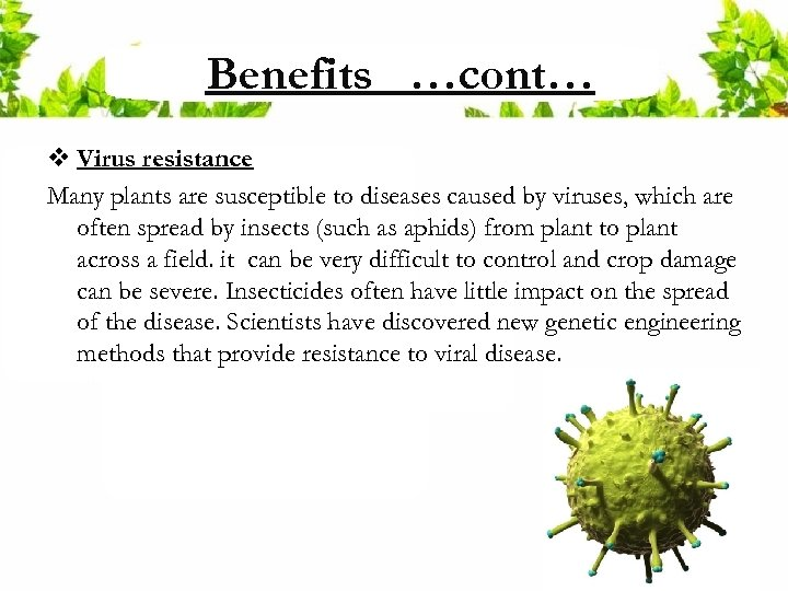 Benefits …cont… v Virus resistance Many plants are susceptible to diseases caused by viruses,