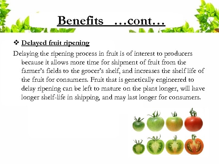 Benefits …cont… v Delayed fruit ripening Delaying the ripening process in fruit is of