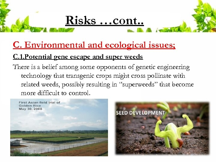 Risks …cont. . C. Environmental and ecological issues; C. 1. Potential gene escape and