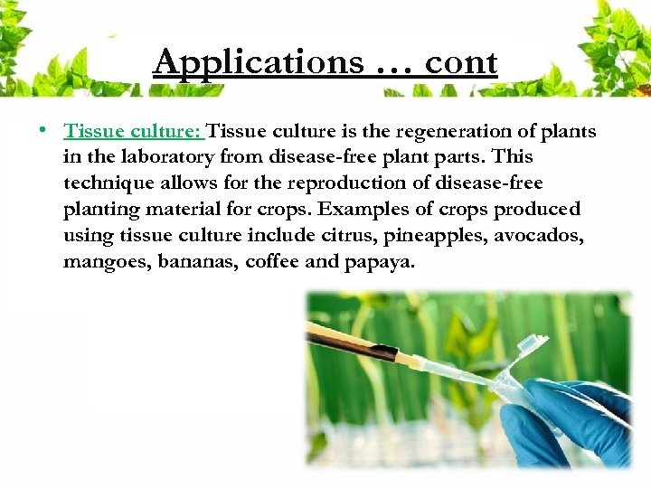 Applications … cont • Tissue culture: Tissue culture is the regeneration of plants in