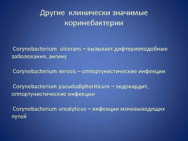 Другие клинически значимые коринебактерии Corynebacterium ulcerans – вызывает дифтериеподобные заболевания, ангину Corynebacterium хerosis –