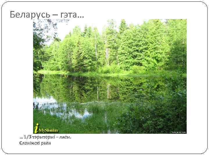 Беларусь – гэта… … 1/3 тэрыторыі – лясы. Слонімскі раён