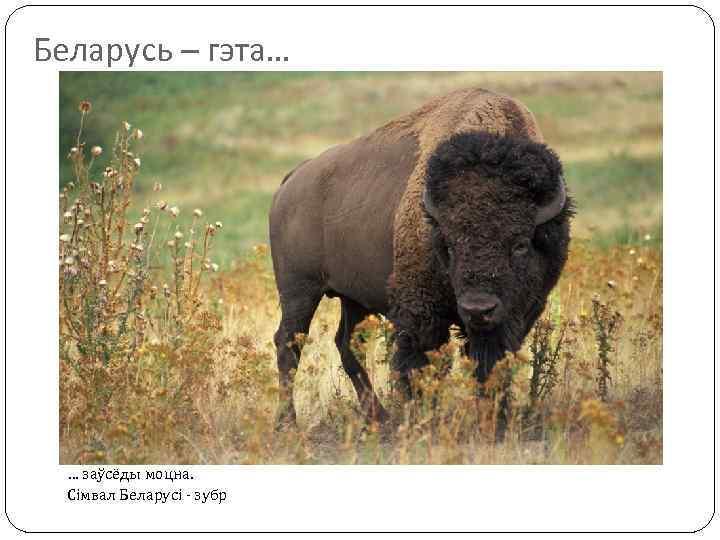 Беларусь – гэта… … заўсёды моцна. Сімвал Беларусі - зубр