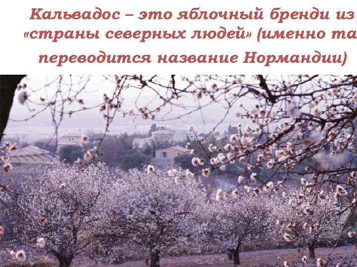 Кальвадос – это яблочный бренди из «страны северных людей» (именно так переводится название Нормандии)