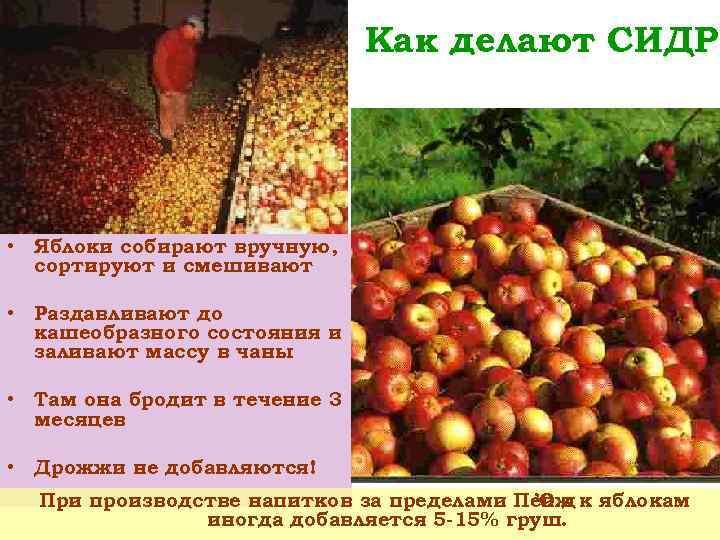 Как делают СИДР • Яблоки собирают вручную, сортируют и смешивают • Раздавливают до кашеобразного