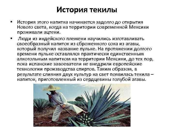 История текилы • История этого напитка начинается задолго до открытия Нового света, когда на