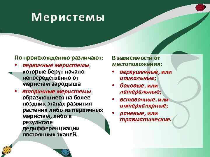 Меристемы По происхождению различают: • первичные меристемы, которые берут начало непосредственно от меристем зародыша